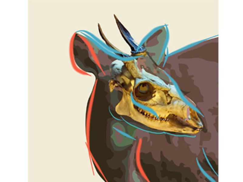 Deconstrucción zoológica serie (Cervicabra)