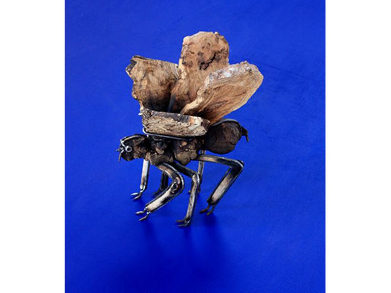 Insecto desconocido III